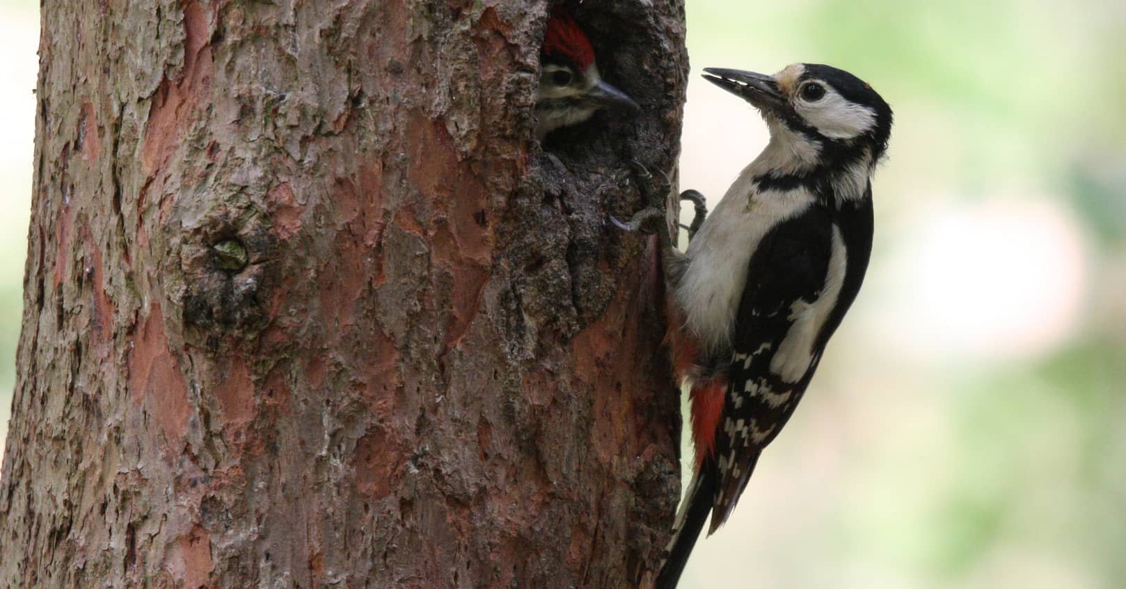 get rid of the woodpeckers